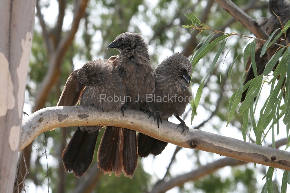 Noisy Wild Birds at Lake Boondooma by aussiebushstick