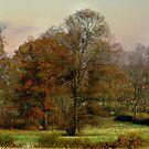 Fall's Trees by Judi Taylor