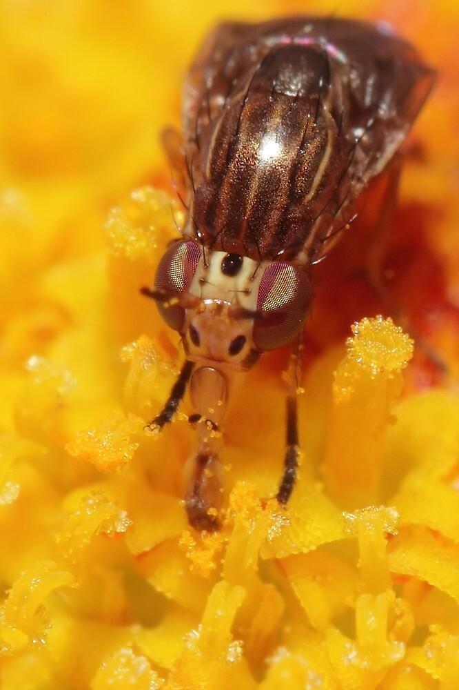 Pollen Licker by Darren Post