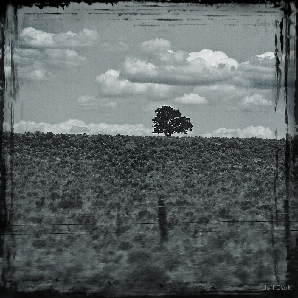 The Lonely Tree by Jeff Clark