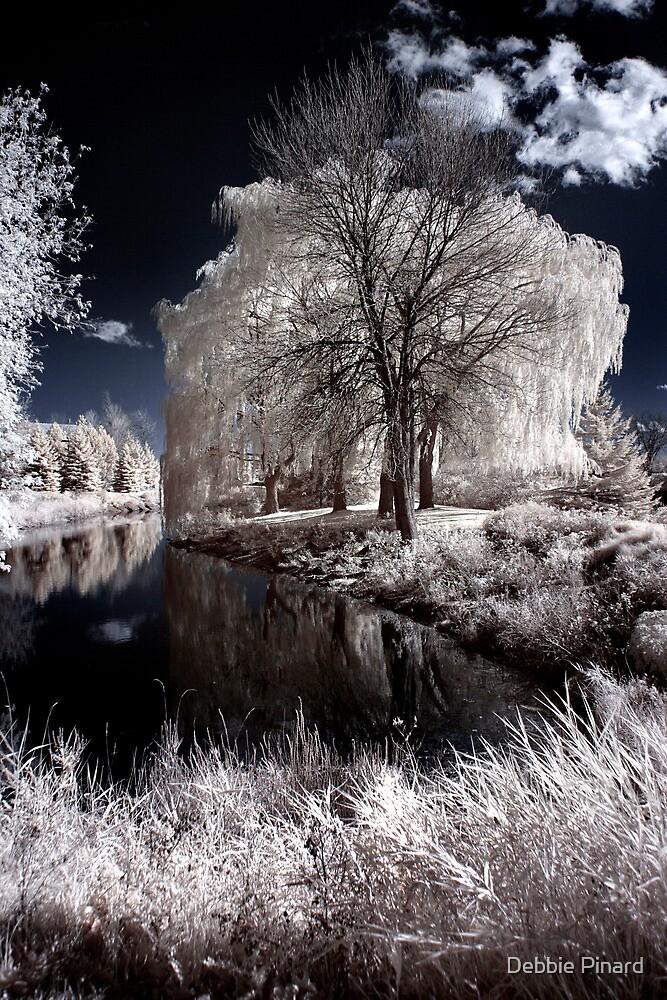 Reflection in Pond - Kanata Ontario by Debbie Pinard