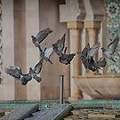 Pigeons at the Moroccan Mosque by DareImagesArt