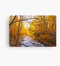 End of Fall! Canvas Print