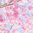 Cherry blossom skies in pastel pink by Zoe Power