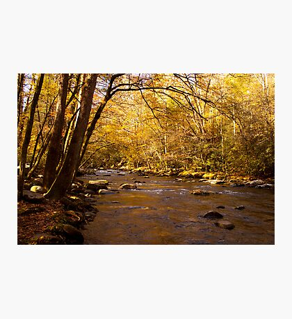 Fall Photographic Print