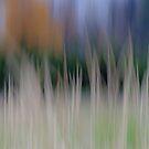 Gentle Breath of Wind by finnarct