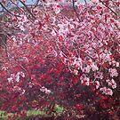 Spring Trees by Lozzar Flowers & Art