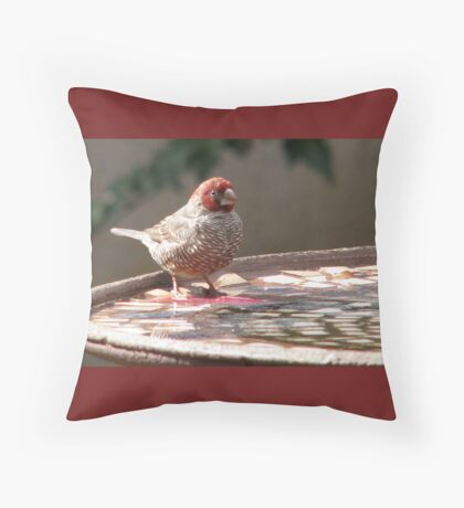 Red-headed finch / Rooikopvink Throw Pillow