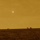 We Three Sheep by duncandragon