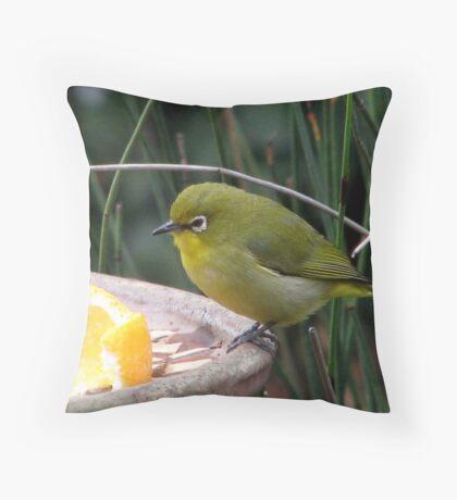 Kaapse Glasogie / Cape White-eye Throw Pillow