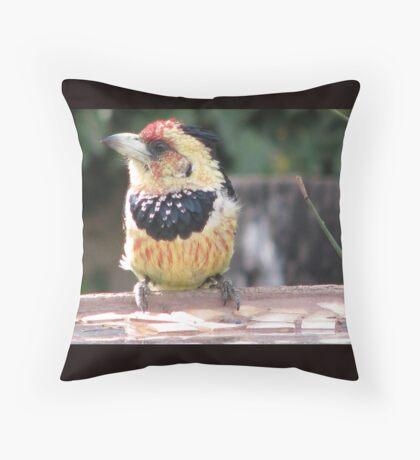 Kuifkophoutkapper / Crested  Barbet Throw Pillow