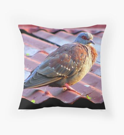Speckled Pigeon/ Kransduif Throw Pillow