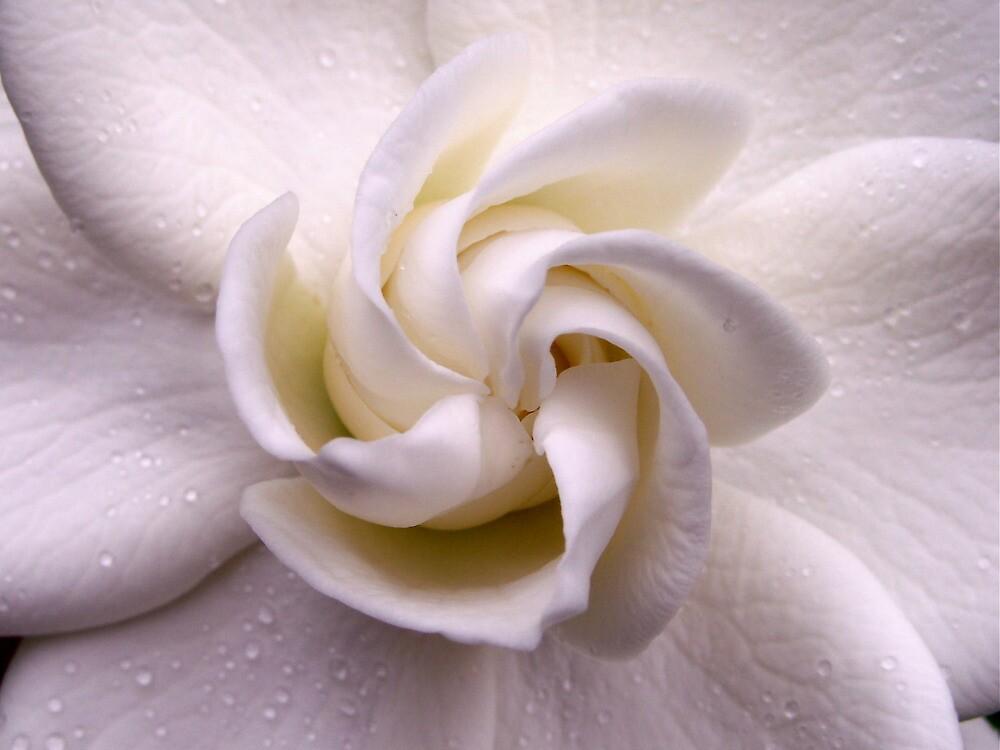 Unfolding Beauty. by Gabrielle  Hope