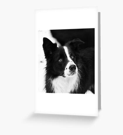 Black & White Dog Greeting Card