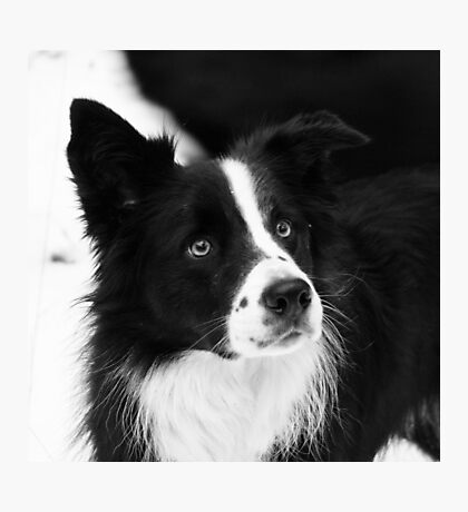 Black & White Dog Photographic Print