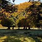 Tree ring by Orla Flanagan