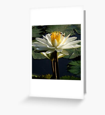 When Nature Awakes ~ Part One Greeting Card