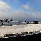 Snow in Tasmania by Josie Jackson