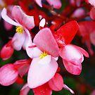 Flowers by Evgenia Attia