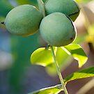 Green walnuts by Evgenia Attia