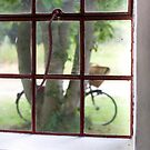 Through the window by Linn Arvidsson