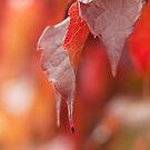 Autumn bokeh by Andrea Rapisarda