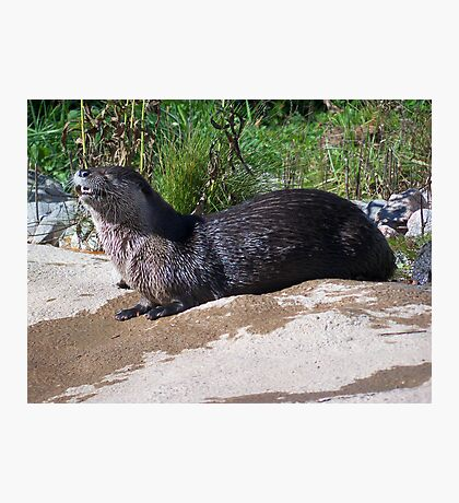 You Otter See This! Photographic Print