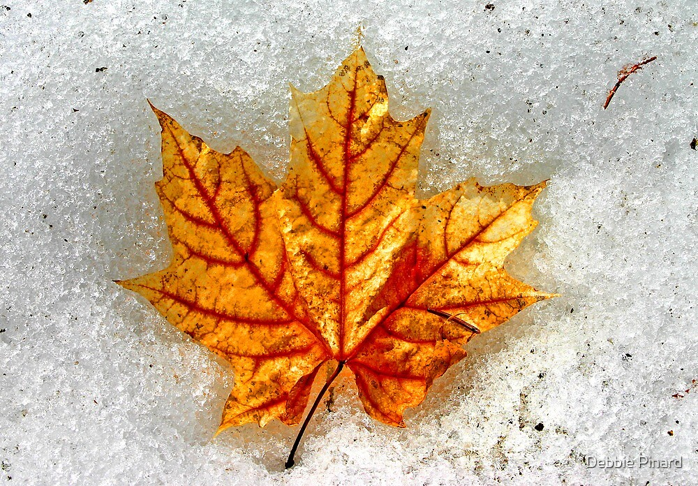 Leaf in Snow by Debbie Pinard