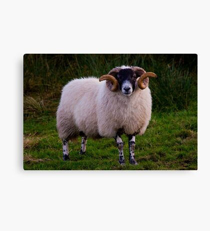 Need Some More RAM ? Canvas Print