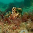Pale Octopus by Andrew Newton