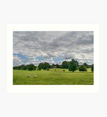Sheep Grazing the Meadow Art Print