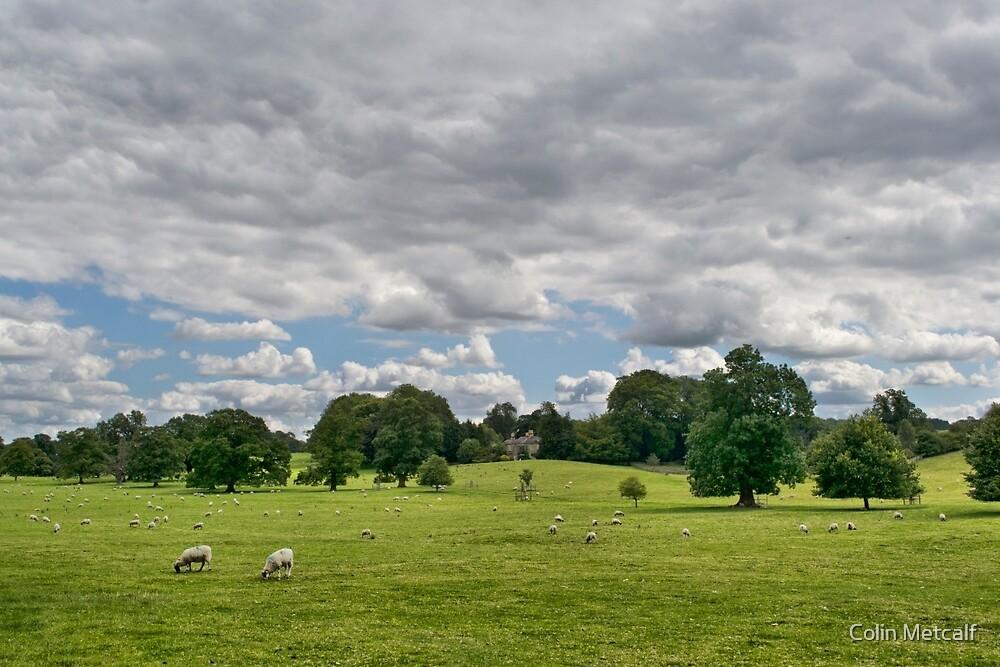 Sheep Grazing the Meadow by tyke29