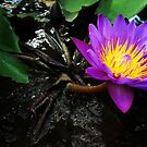 Bali Water Flower by Charlie-Helen Robinson