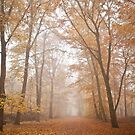 calm autumn forest by jrenner