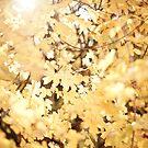 golden leaves by jrenner