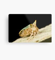 Green Horned Treehopper Metal Print