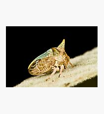Green Horned Treehopper Photographic Print