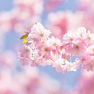 Cherry blossom in soft pastel pinks by Zoe Power