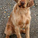Meet Ditte's sweetheart Odin! by Trine