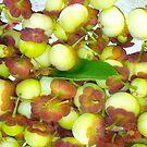 Sweetleaf Vegetable NUTS! by D. D.AMO