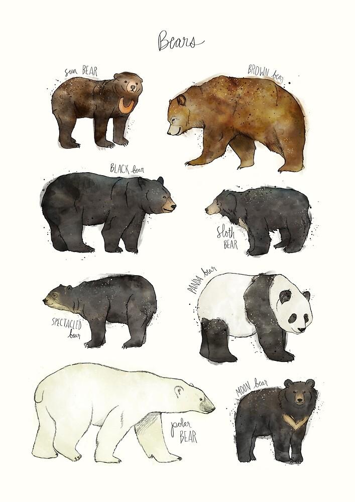 Bears by Amy Hamilton