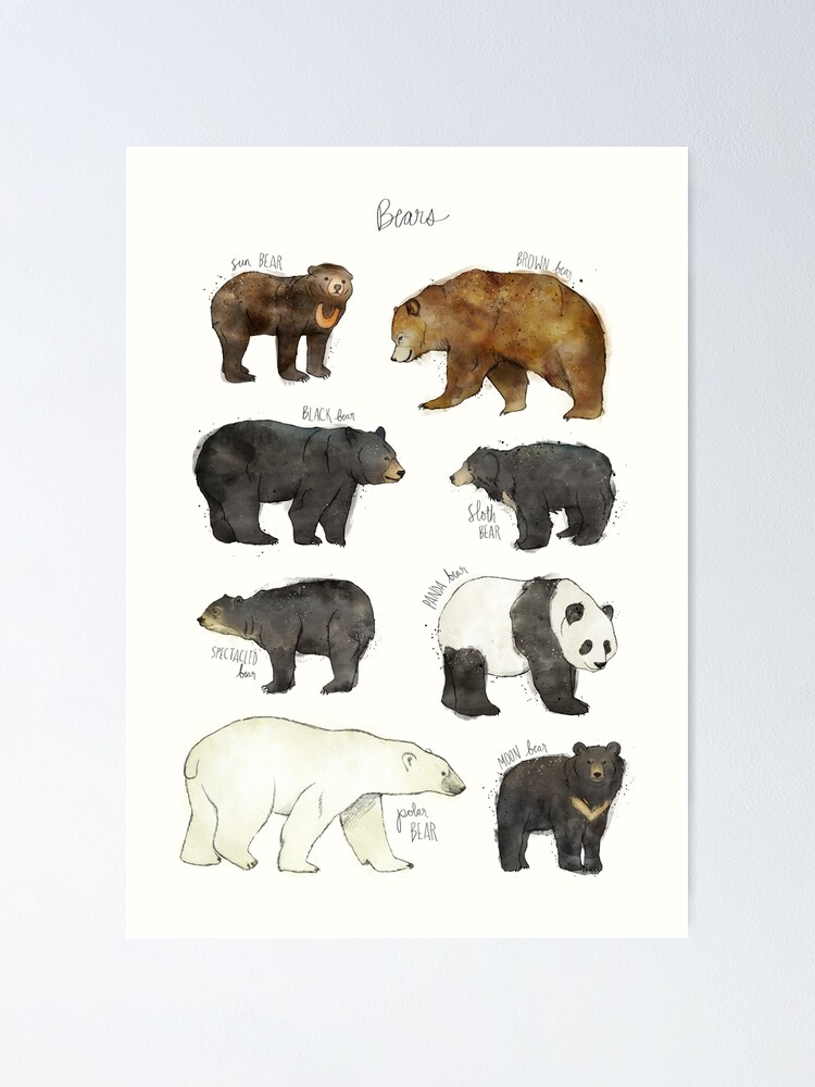 Alternate view of Bears Poster