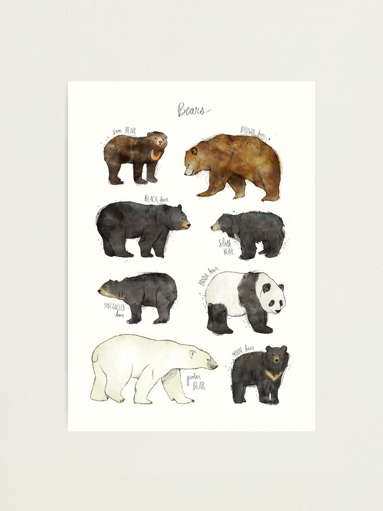 Alternate view of Bears Photographic Print