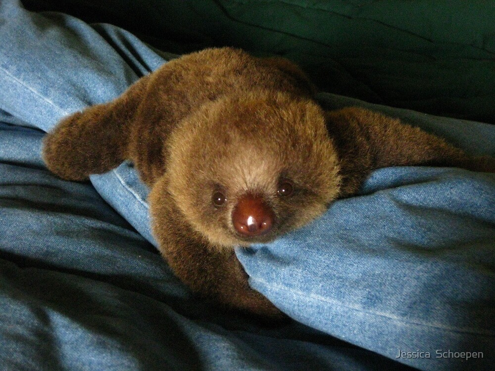 Baby Sloth by Jessica  Schoepen