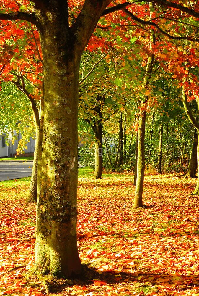 Golden Autumn Trees by ©The Creative  Minds