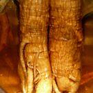 Ginseng roots by D. D.AMO
