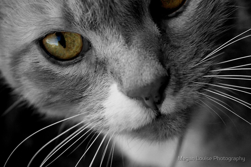 toutch of yellow black and white by Megan Louise Photography