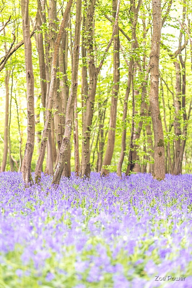 Bluebell woodland, East Sussex, UK by Zoe Power