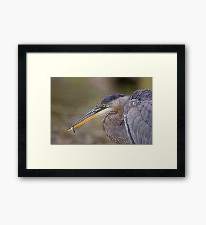 Small fry! Framed Print