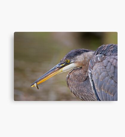 Small fry! Canvas Print